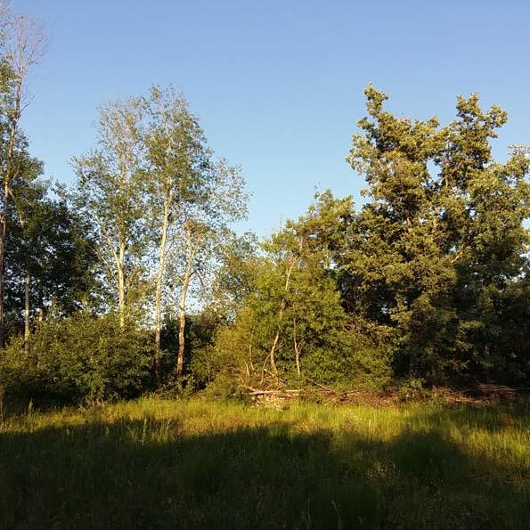 Puesta de sol en El Jardín Tintóreo de Mundo Lanar