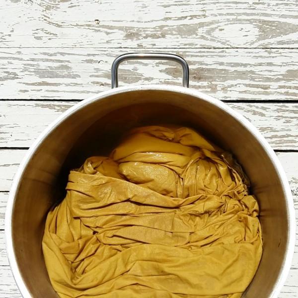 Algodón orgánico teñido con amarillo gualda_reseda luteola