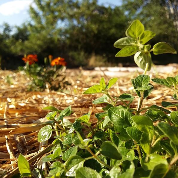 Permacultura_El Jardín Tintóreo de Mundo Lanar