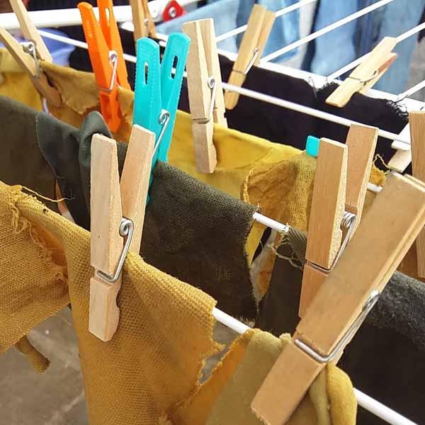 Secando muestras de algodón teñidas con tintes naturales