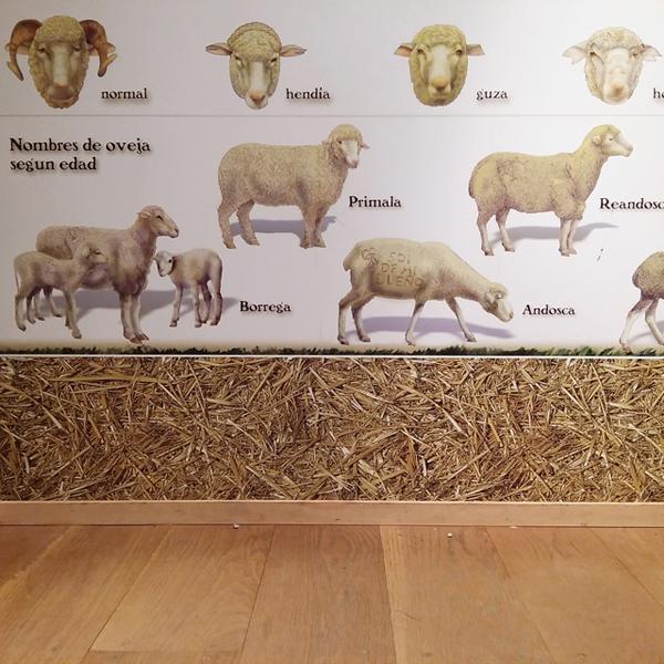 aprendiendo-sobre-ovejas-en-el-centro-de-interpretacion-de-la-trasmumancia_venta-de-piqueras