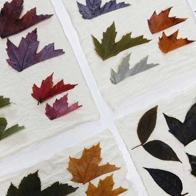 investigacion-tintorea-con-plantas-locales-para-ecoprint-_-estampacion-botanica