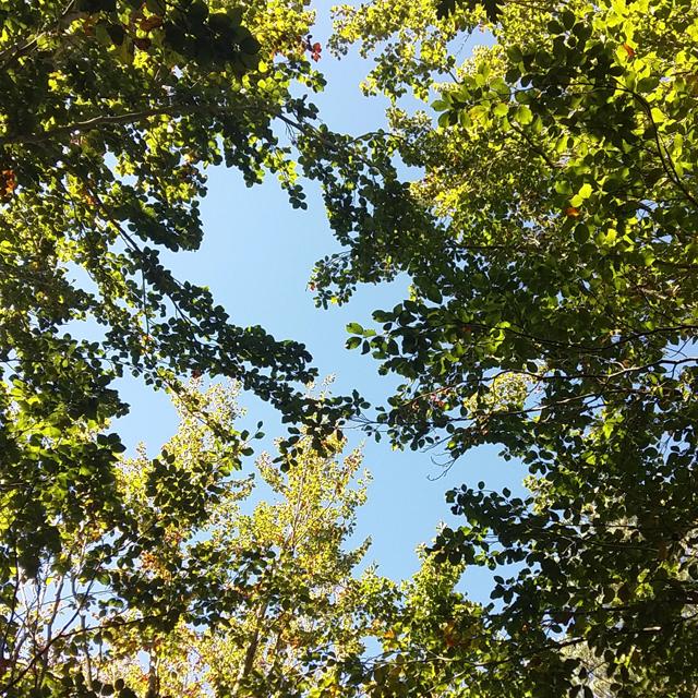 recolectando-hojas-para-ecoprint-diseno-textil-con-estampacion-botanica