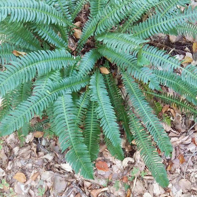 recolectando-hojas-para-ecoprint_estampacion-botanica