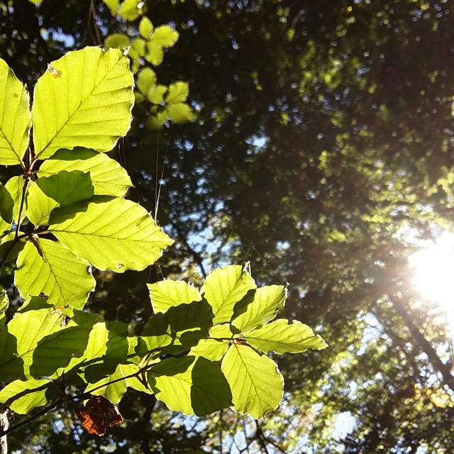 recolectando-hojas-para-ecoprint_estampacion-botanica_bosque-de-hayas