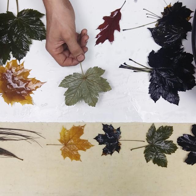 Preparando proyectos de Ecoprint _ Estampación Botánica