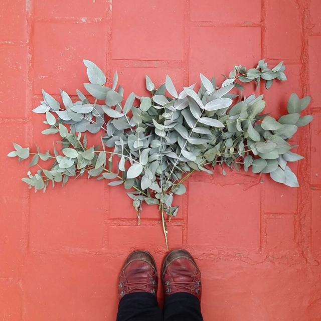 Recolectando hojas para Ecoprint Estampación Botánica
