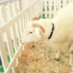 Wool Melange!