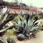 Tintes Naturales en el Real Jardín Botánico de Madrid