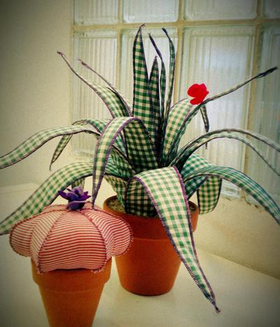 Cactus sin pinchos