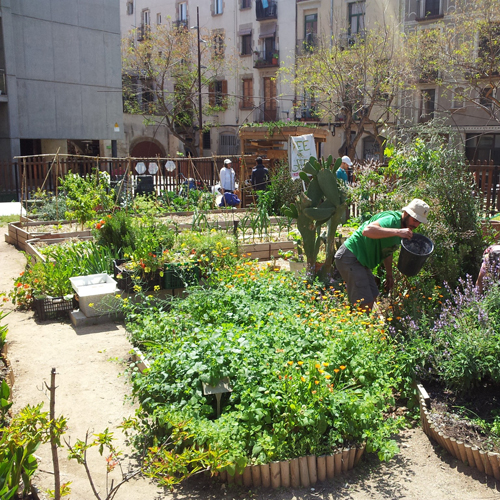 Huerto urbano participativo