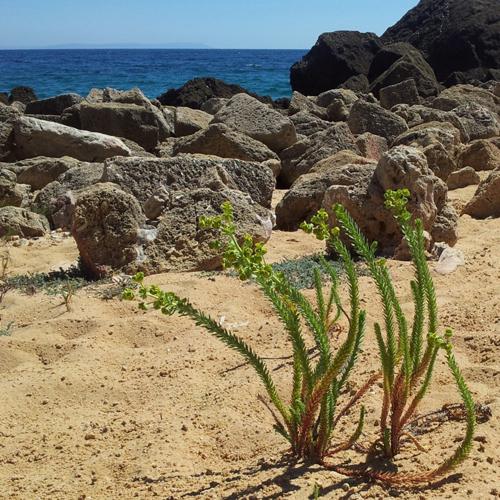 flora costera