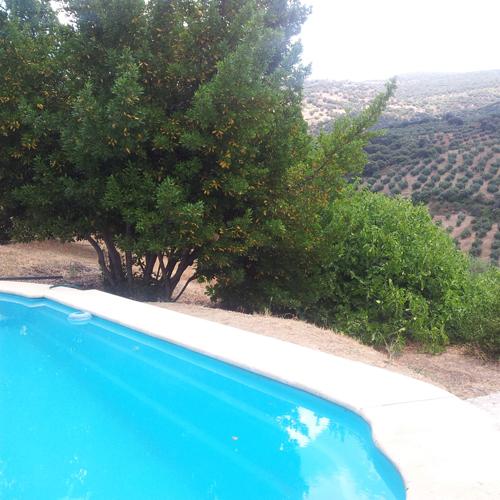 una piscina en medio del olivar