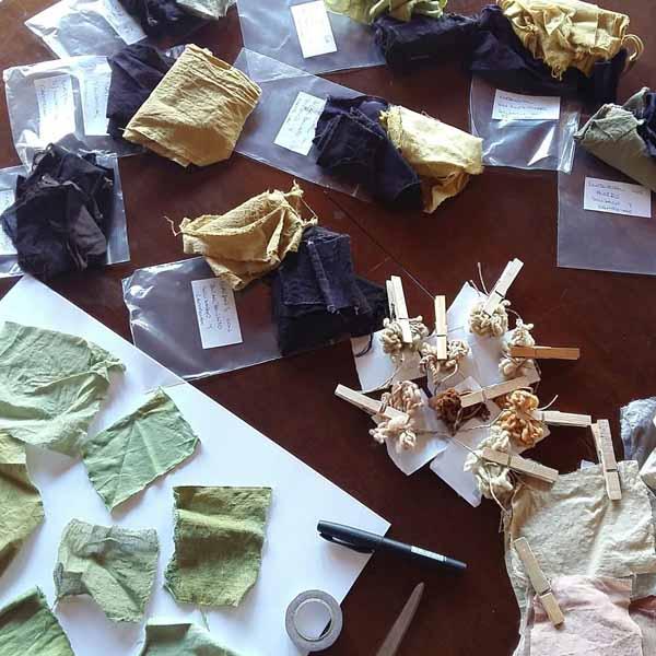 Elaborando el muestrario de algodón teñido con tintes naturales