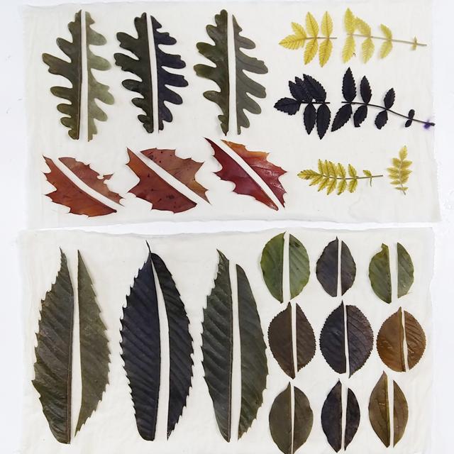 investigacion-con-plantas-locales-para-ecoprint_estampacion-botanica