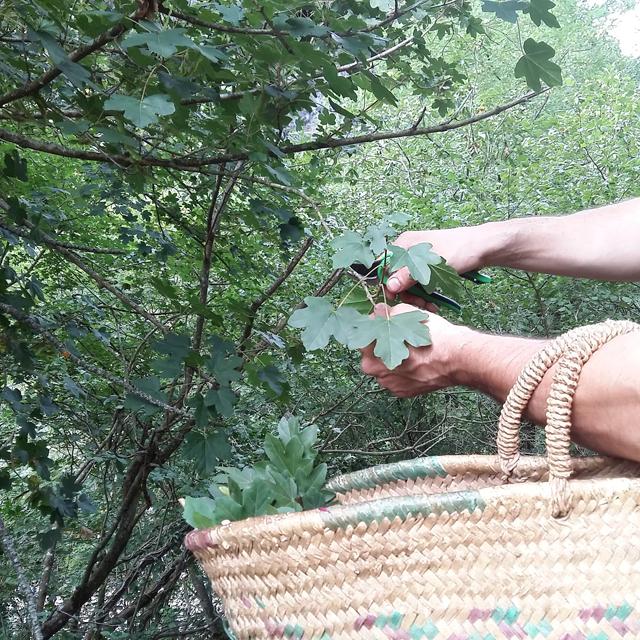 recolectando-hojas-para-ecoprint-_-estampacion-botanica