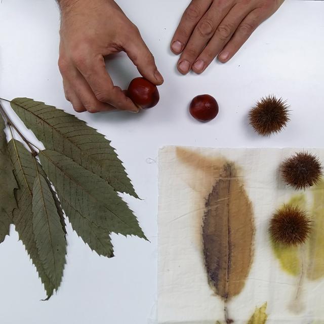 Investigando el castaño para Ecoprint_Estampación Botánica