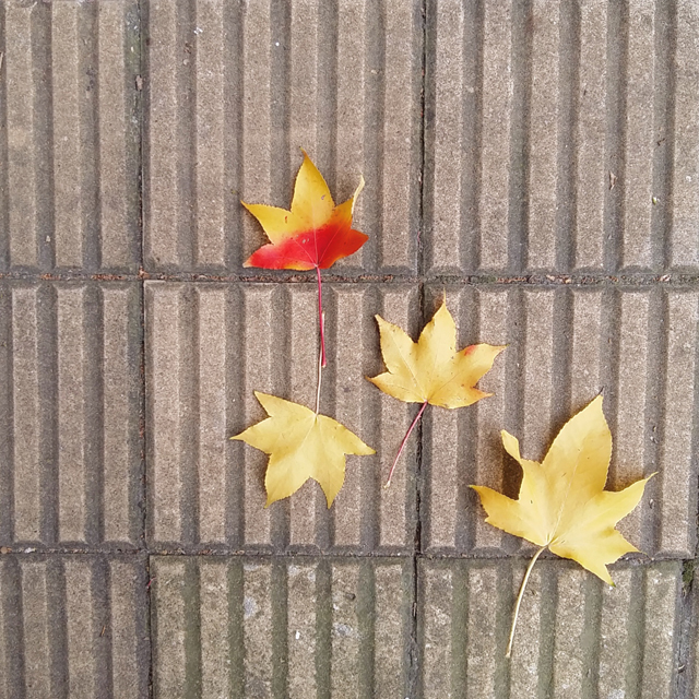 Recolectando hojas aptas para Ecoprint_Estampación Botánica
