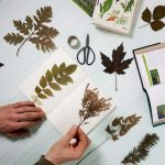 Próximos cursos de Tintes Naturales en The Dyer's House